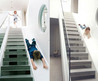 25 Unique And Creative Staircase Designs
