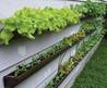 3 Vegetable Garden Tips And Ideas For Beginners