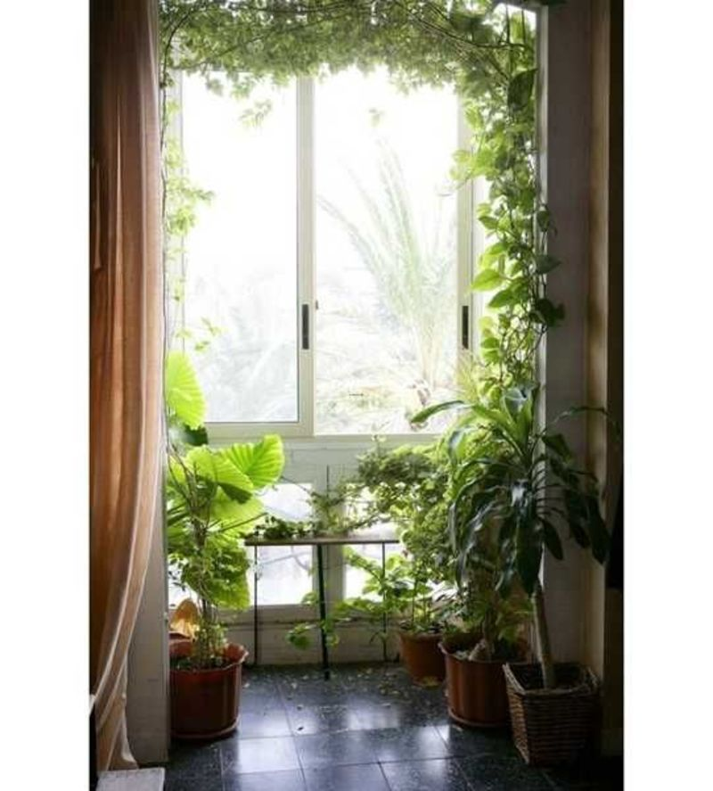 Fresh Indoor Plants Decoration Ideas For Interior Home