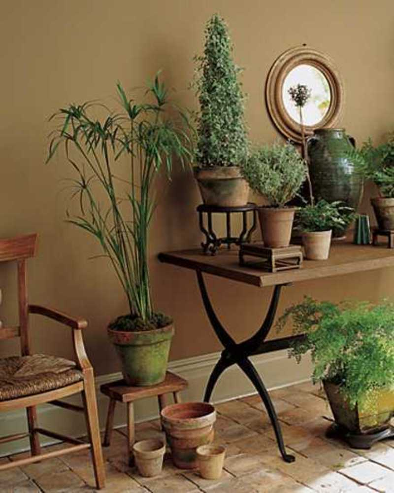 Garden therapy hardy houseplants design bookmark 20126 for Indoor greenery ideas