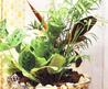 Maranta Plant For Interior Decorating With Green Accessories