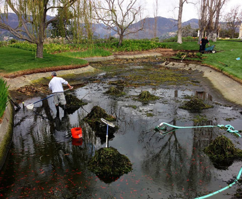Mr fish aquarium and pond service in los angeles for Koi pool construction