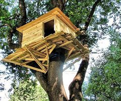 Classic Treehouse