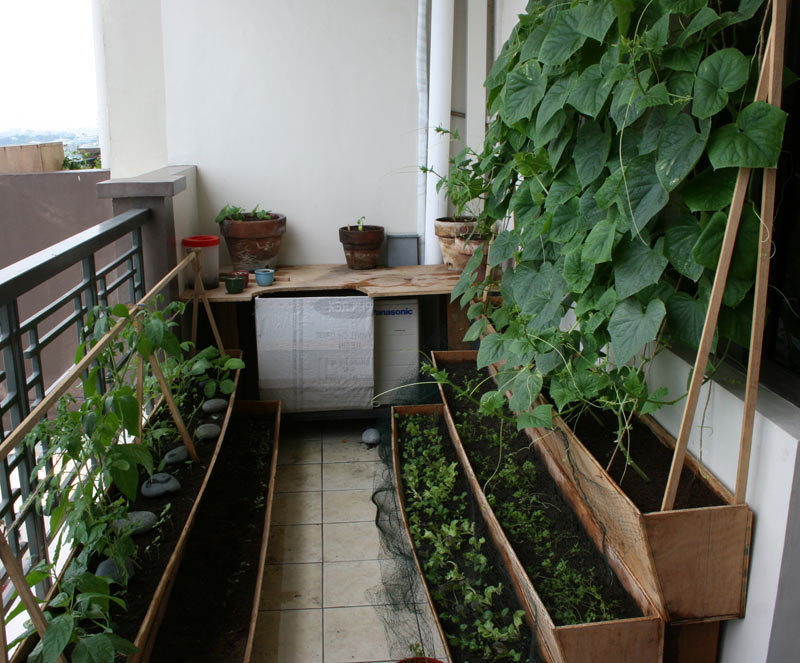 Fresh veges from your balcony vegetable garden design for Balcony vegetable garden