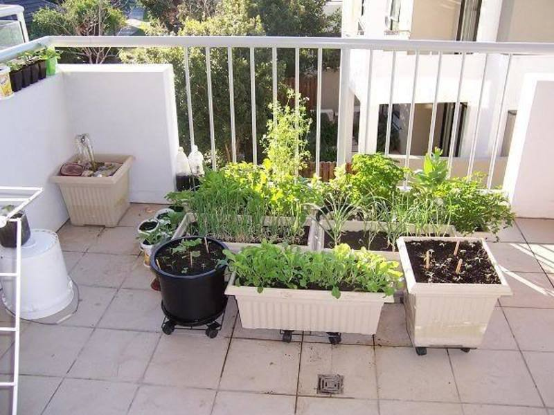 6 tips to start balcony garden ideas for vegetables for Balcony vegetable garden ideas