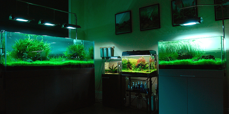 Aqua Forest Aquarium, Aquascaping In L.A.