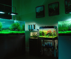 Aquascaping In L.A.