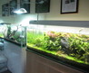 Aqua Forest Aquarium, Fillmore, San Francisco – Baking Me Hungry