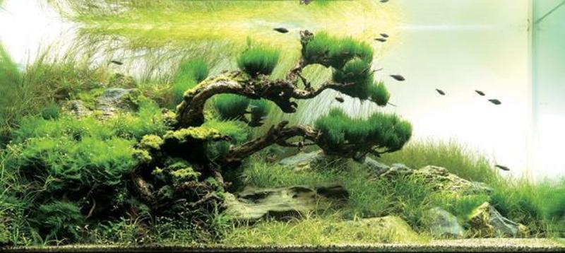 Aqua Forest Aquarium, An Arrangement By San Francisco