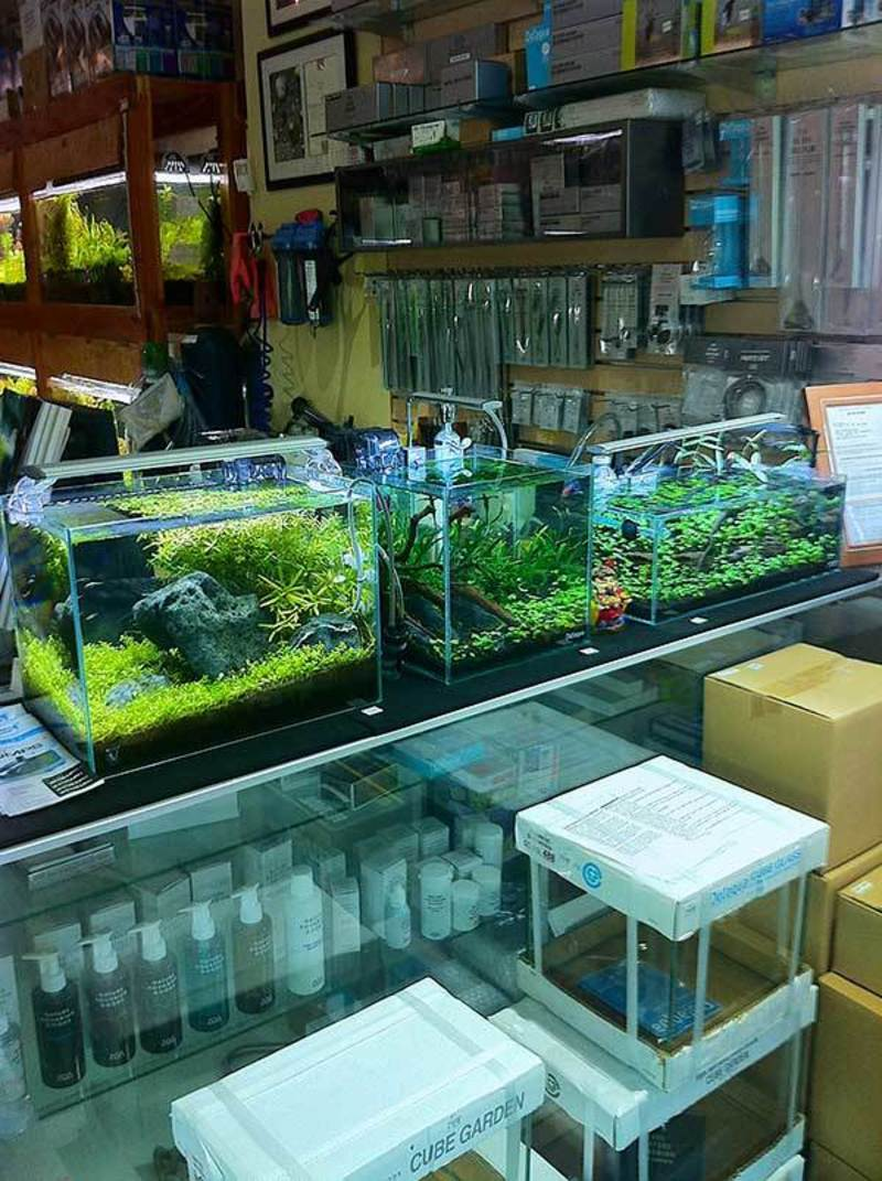 Aqua Forest Aquarium, A Brief Visit To Aqua Forest Aquarium