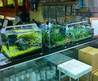 A Brief Visit To Aqua Forest Aquarium