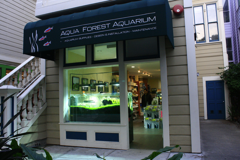 Aqua Forest Aquarium, Aqua Forest Aquarium In Fillmore Street, San Francisco. Official Ada Distributor.