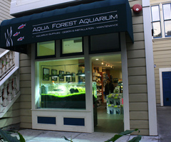 Aqua Forest Aquarium In Fillmore Street, San Francisco. Official Ada Distributor.