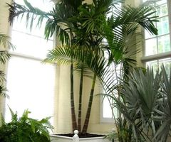 1000+ Images About Showroom Plants On Pinterest