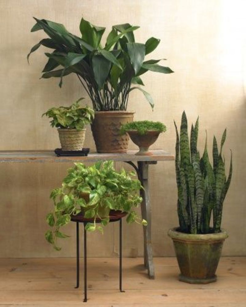 Exotic Low Light House Trees, Houseplants For Any Kind Of Light