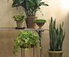 Houseplants For Any Kind Of Light
