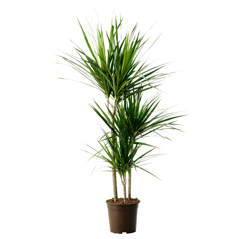 Modern Indoor Plants, Modern Indoor House Plants