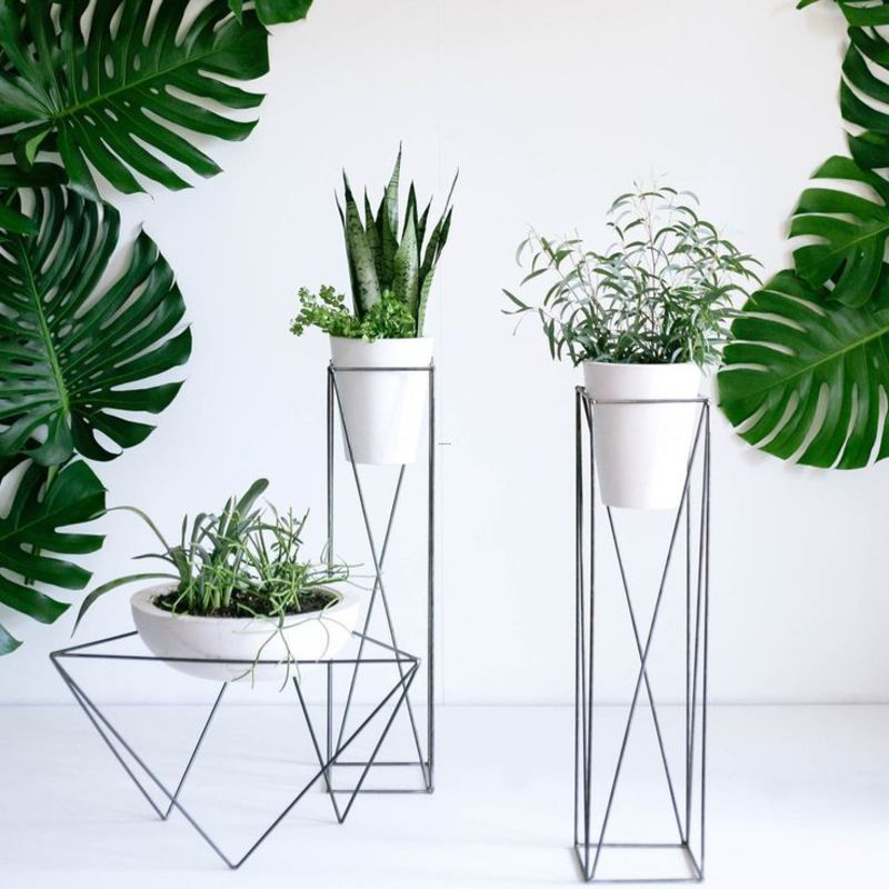 Modern Indoor Plants, 25+ Best Ideas About Indoor Plant Stands On Pinterest