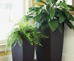 Indoor Plants With Modern Pots