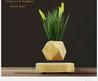Modern Indoor Plants Online